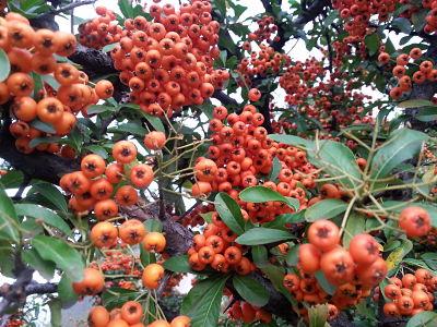 mopana A Coloured Autumn